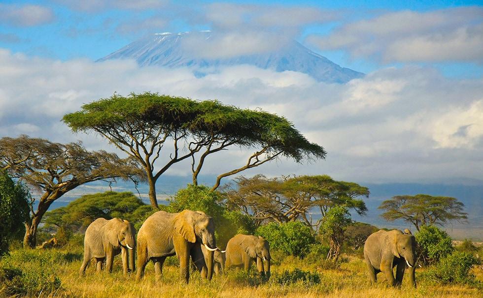 top_50_merveilles-monde-tanzanie-mont-kilimanjaro