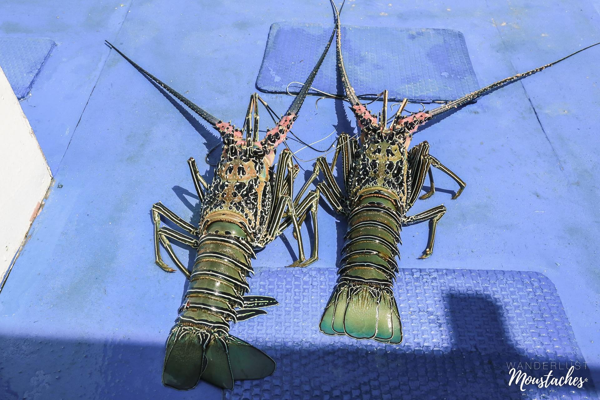Les langoustes fraîches du pêcheur dans l'archipel de Bacuit