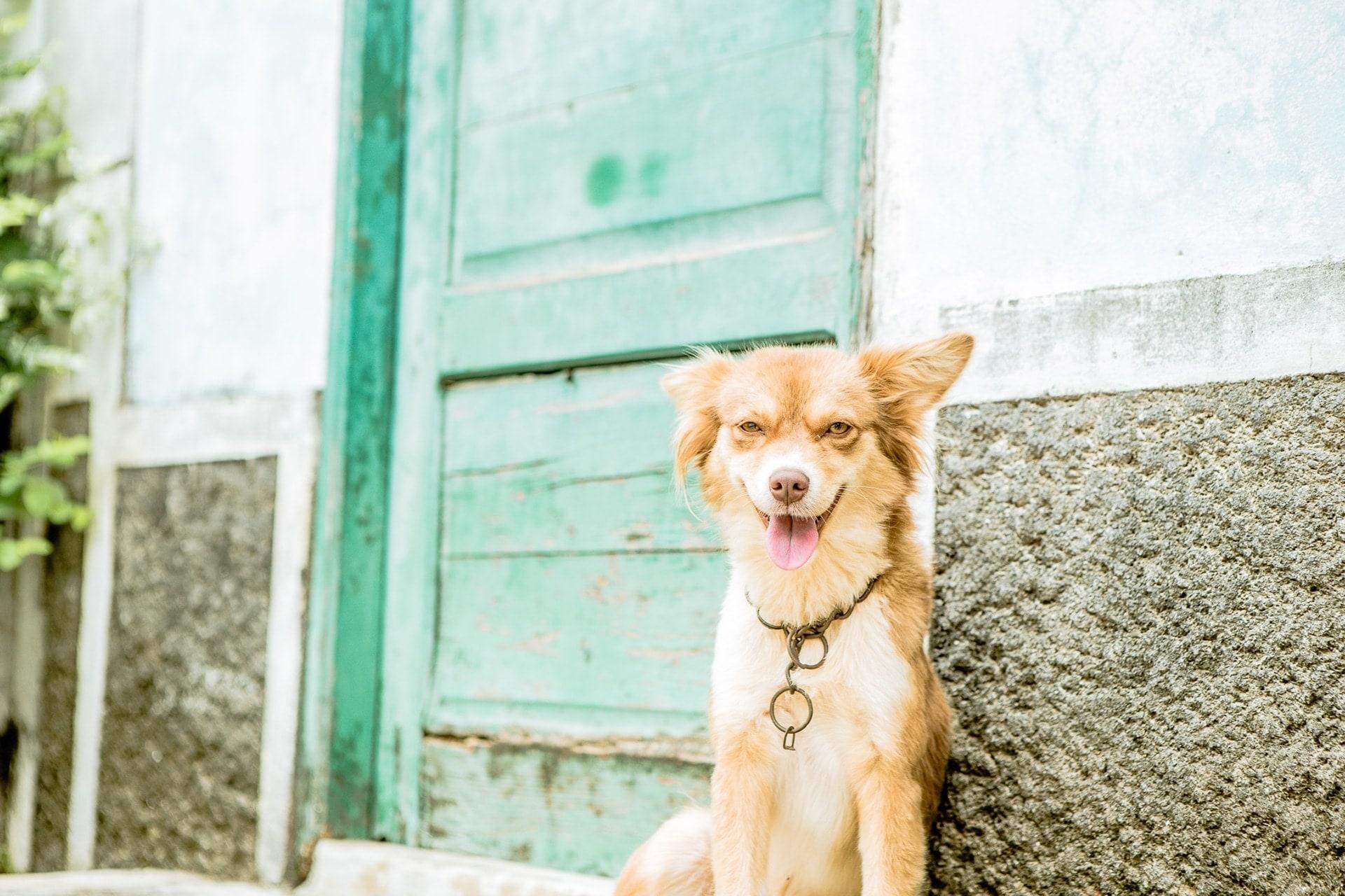 Un joli chien qui prend la pose à Santo Antao