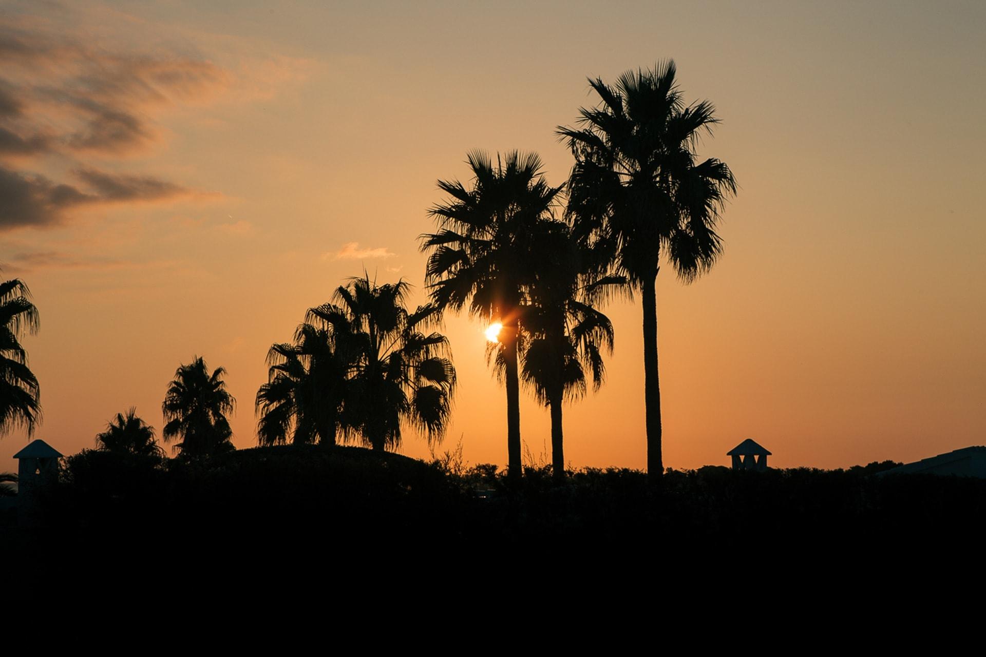 Palmiers au coucher du soleil aux Baleares