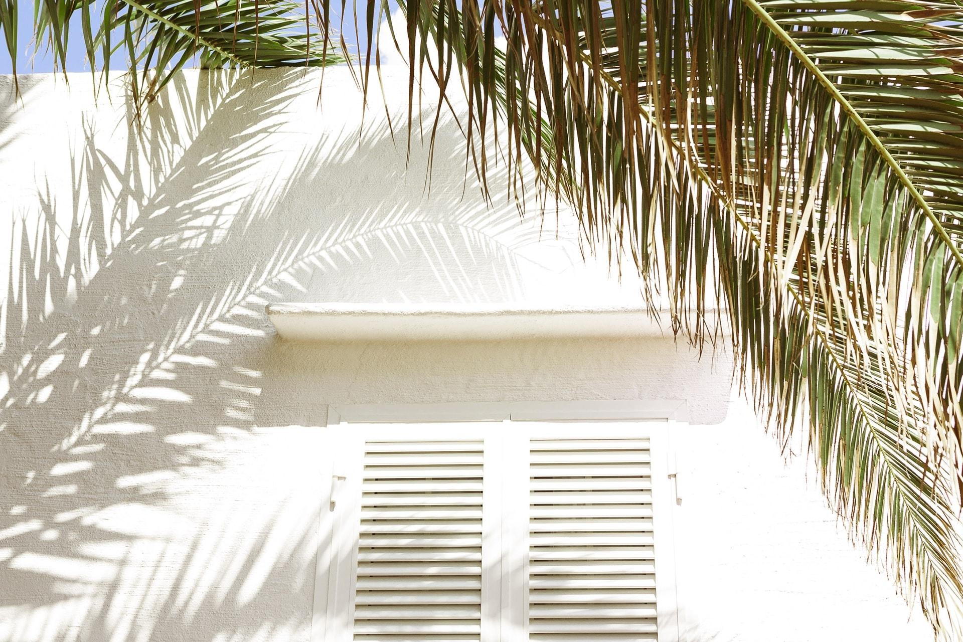 Fenêtre et ombre d'un palmier sur u mur blanc à Minorque
