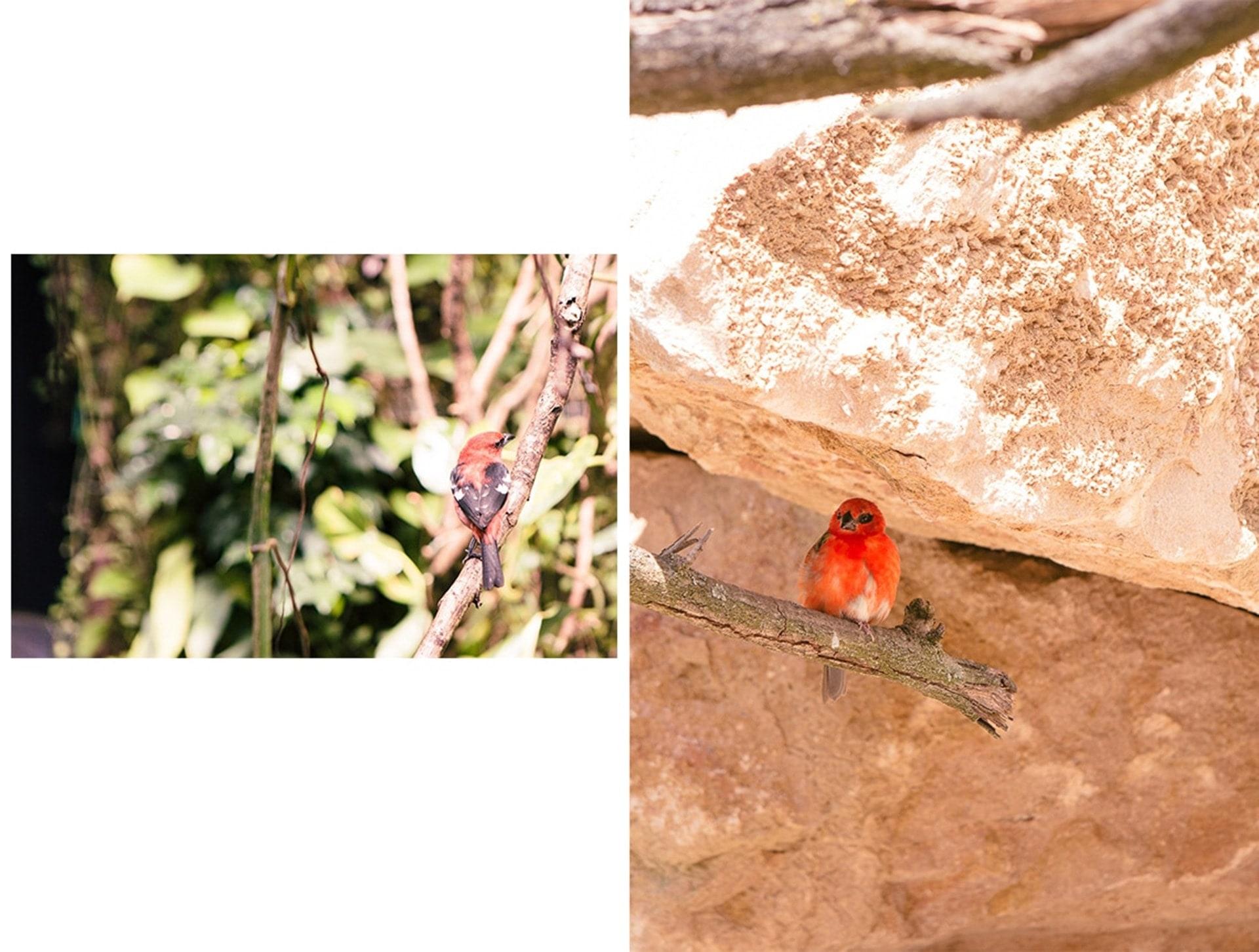 OIseaux du parc des oiseaux de Villars les Dombes